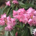 春の草津温泉